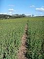 Field Path - geograph.org.uk - 763433.jpg