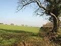 Field near Hill Top Farm - geograph.org.uk - 2318691.jpg