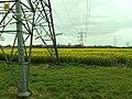 Field of rape or a field of pylons - geograph.org.uk - 397863.jpg
