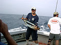 Fisherman with albacore tuna 2.jpg