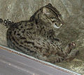 FishingCat.jpg