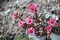 Fleurs sauvages accrochées sur de la roche.jpg