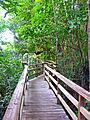 Flickr - archer10 (Dennis) - Belize-0956.jpg