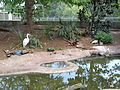 Flint Riverquarium, Cypress Pond Aviary exhibit 01.JPG