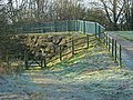 Flood bank at Colwick Country Park - geograph.org.uk - 651531.jpg