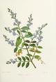 Flower-duranta.png