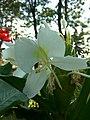 Flower 16 HDR.jpg