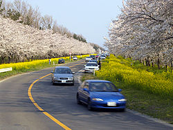 Flower Road - panoramio.jpg