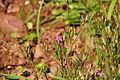 Flower in Radford Woods (5008).jpg