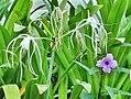 Flower purple side road.jpg