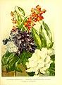 Flowergrowersgui41898wrig 0023.jpg