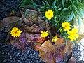 Flowerpic.jpg