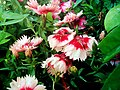Flowers (212805389).jpg