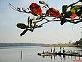 Folhas e Frutos da Sete Copas(Terminalia catappa), ao fundo o Rio Dourado - panoramio.jpg