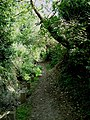 Footpath Through Darenth Wood - geograph.org.uk - 48933.jpg