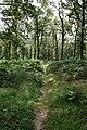 Footpath Through Miterdale Forest - geograph.org.uk - 537705.jpg