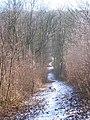 Footpath in Valley in Halling Wood - geograph.org.uk - 1118269.jpg