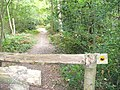 Footpath into Greatlee Wood - geograph.org.uk - 565394.jpg