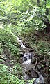 ForestJune.jpg