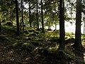 Forest near Lake Rutajärvi - panoramio.jpg