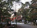 Forest of Sumiyoshi Shrine 3.jpg
