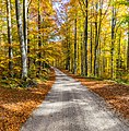 Forest road in Autumn (37783276611).jpg