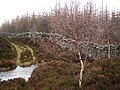 Forest track, wall and burn - geograph.org.uk - 346625.jpg
