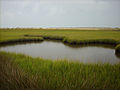 Fort Fisher State Recreation Area Salt Marsh.JPG