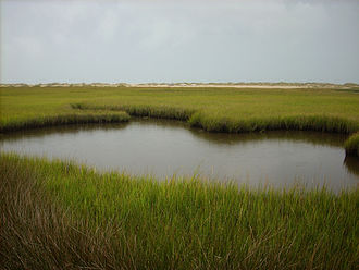 Fort Fisher State Recreation Area - Salt Marsh off the Basin Trail, October 2007