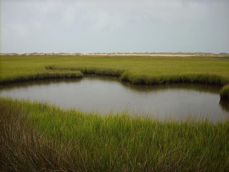 File:Fort Fisher State Recreation Area Salt Marsh.JPG