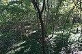 Fort Worth Botanic Garden October 2019 11 (Texas Native Forest Boardwalk).jpg