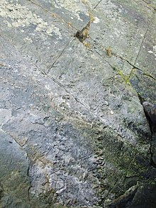 Fossil Footprints Arthropleura - geograph.org.uk - 1994274.jpg