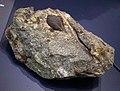 Fruit kernel fossil.jpg
