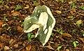 Fungus, Helen's Bay (1) - geograph.org.uk - 947393.jpg