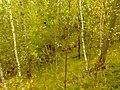 G. Novouralsk, Sverdlovskaya oblast', Russia - panoramio (142).jpg