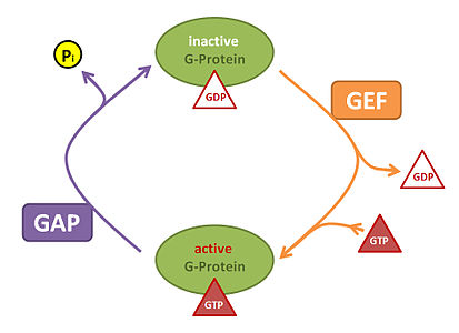 GEF and GAP system.jpg