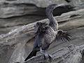 Galápagos Inseln, Ecuador (13918829824).jpg
