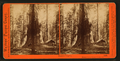 Galen's Hospice, Mariposa Grove, Mariposa County, Cal, by Watkins, Carleton E., 1829-1916 4.png