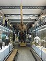 Galerie du Musée d'histoire Naturelle Lille (fev 2015) (3).JPG