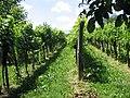 Garabonc, 8747 Hungary - panoramio (5).jpg