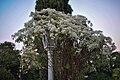 Garden-Sahelion Ki Bari, Udaipur.jpg