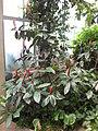 Gardenology-IMG 7990 hunt10aug.jpg