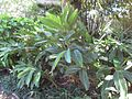 Gardenology.org-IMG 0485 rbgs10dec.jpg