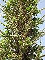 Gardenology.org-IMG 4443 hunt0904.jpg