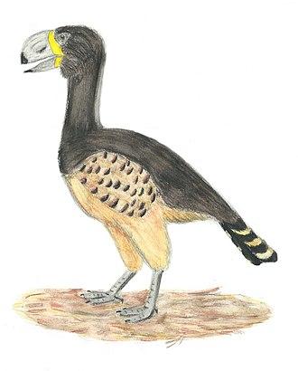 Anseriformes - 70 px