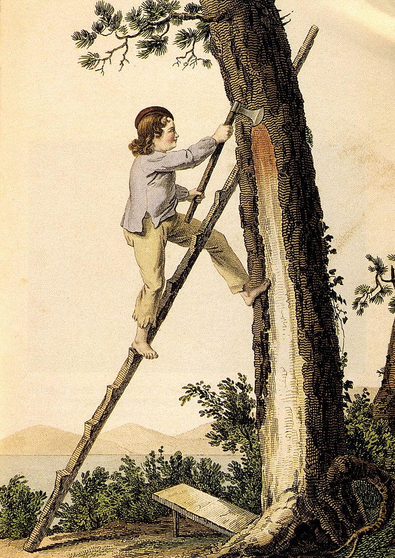 Gravure de Gustave de Galard, illustrant le gemmage au crot en 1818 à la Teste de Buch (Gironde, Aquitaine, France)