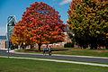 Gettysburg College Fall.jpg