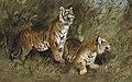 Geza Vastagh Tiger im hohen Gras.jpg