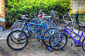 Gfp-bikes-on-a-rack.jpg
