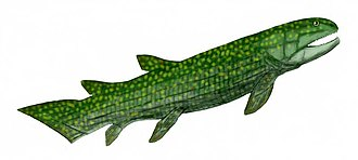 Tetrapodomorpha - 70 px
